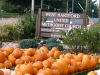 WHUMC Pumpkin Patch
